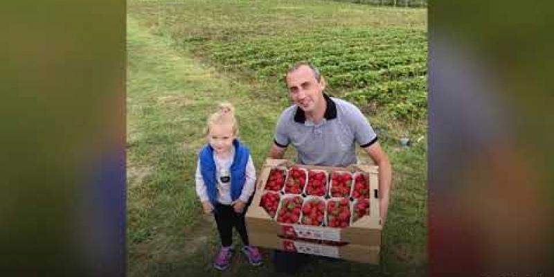 Вбудована мініатюра для З фронту на плантацію: як ветеран АТО вирощує полуницю на Львівщині