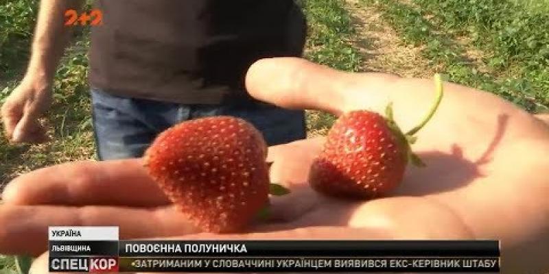 Вбудована мініатюра для Боєць-доброволець Микола Стецьків побудував еко-ферму