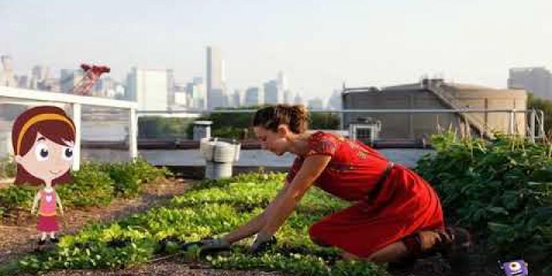 """Вбудована мініатюра для Професія майбутнього: """"сіті-фермер"""""""
